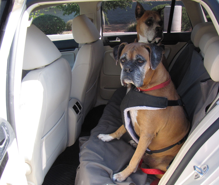 Loki and Pepper, buckled up in Chris' Volkswagen Jetta Sportwagen