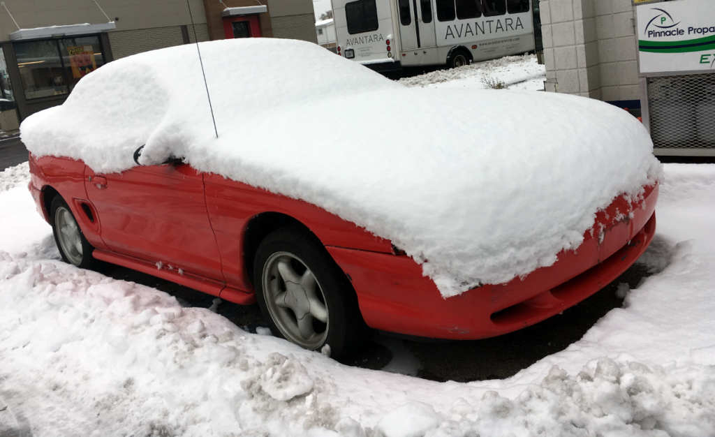 Snow-bound Mustang